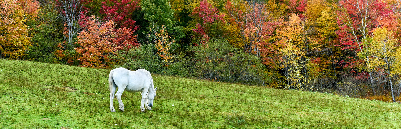 vermont-horse-farm-properties-for-sale.jpg